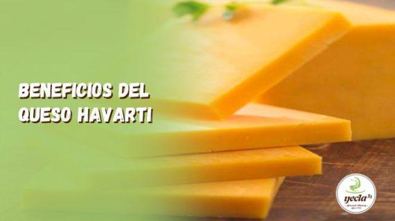 ¿Cuáles son los beneficios del queso Havarti?