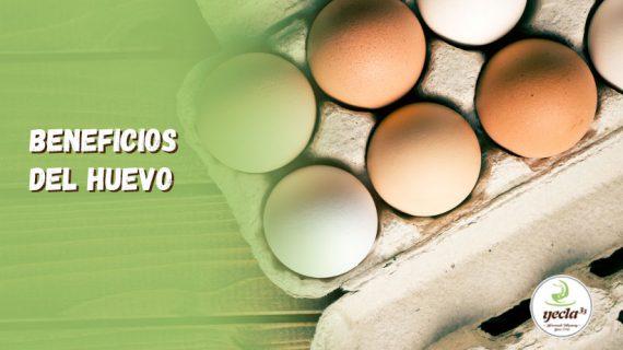¿Cuáles son las cualidades nutritivas del huevo?